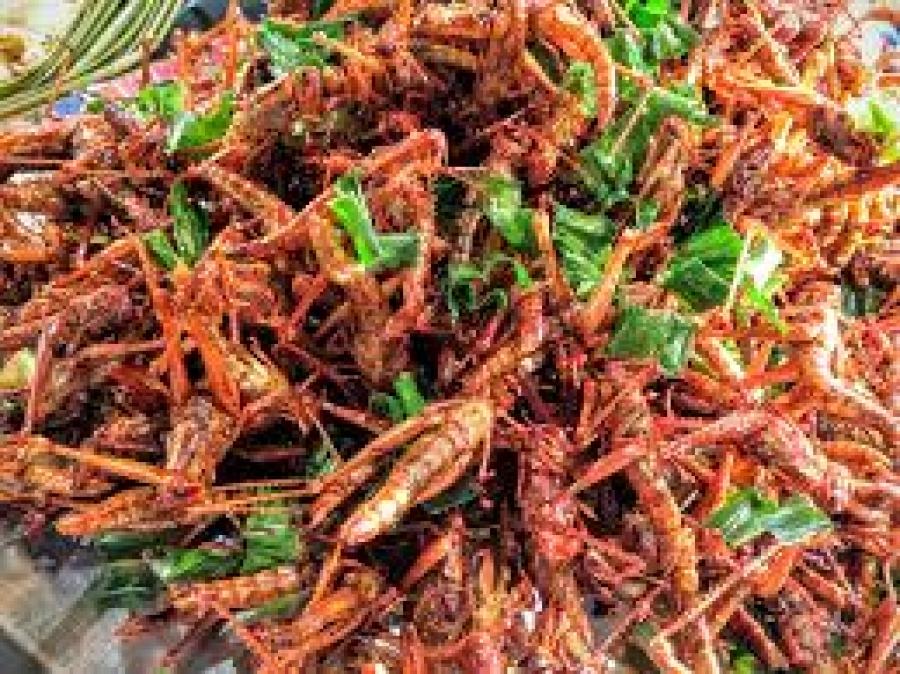 L anno degli insetti nella cucina italiana un breve focus
